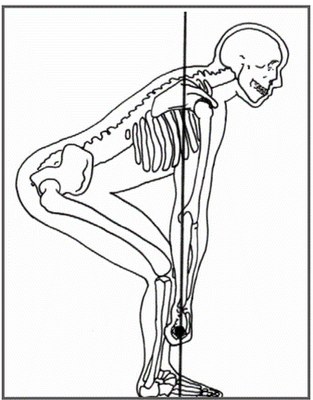 http://crossfitthreshold.files.wordpress.com/2009/03/picture1-deadlift-skeleton-view.png?w=313&h=400
